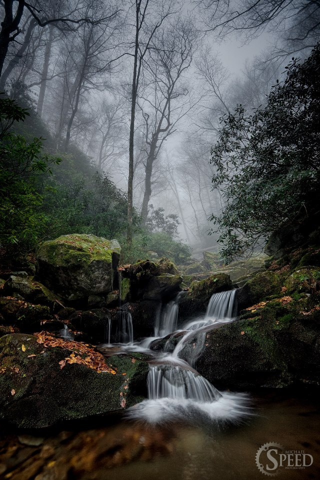 Photograph Foggy Forest by Michael Speed on 500px