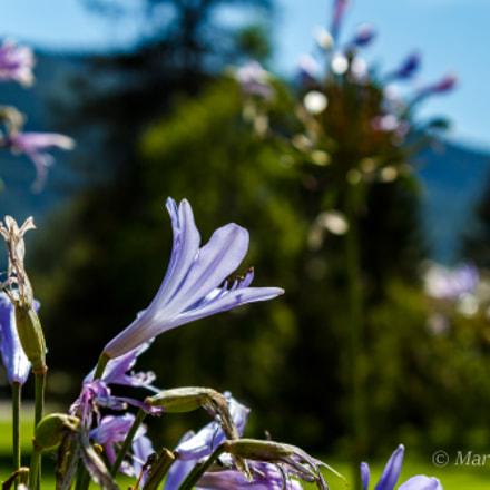Blüten in der Vormittagssonne