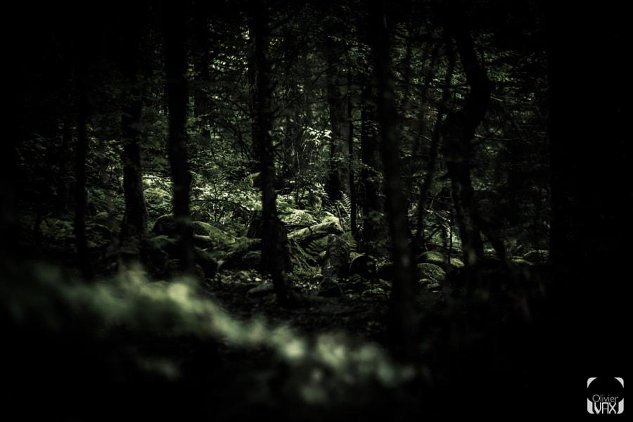 La bête des Vosges © Olivier Vax