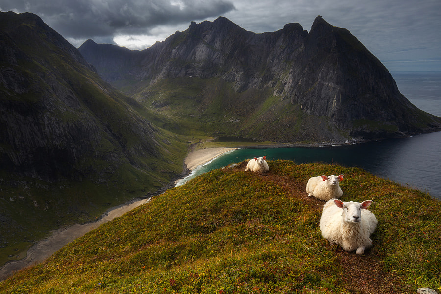 pretty sheeps on Ryten by Andrej Bazanov on 500px.com