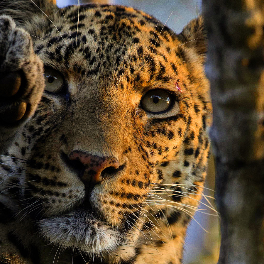Spotted by Chris Fischer on 500px