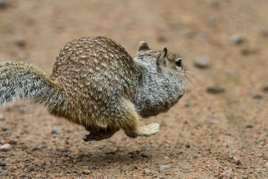 Photograph .: Haulin Nuts! :. by Jon Rista on 500px