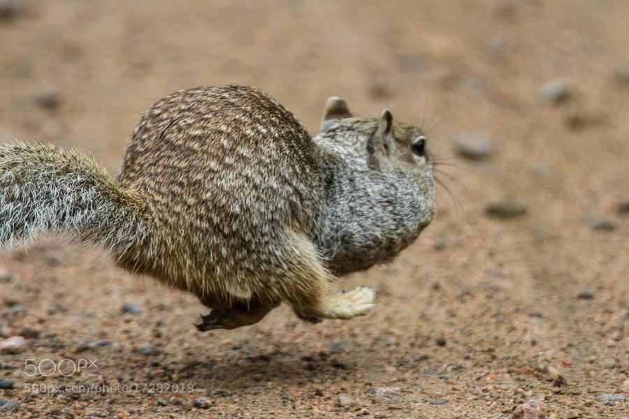Photograph .: Haulin Nuts! :. by Jon Rista on 500px