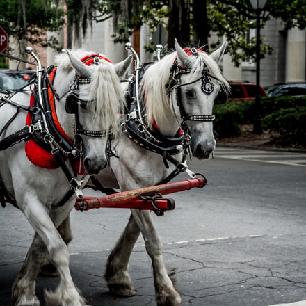 horse drawn carriage, Nikon D7100, Sigma 28-200mm F3.5-5.6 Compact Aspherical Hyperzoom Macro