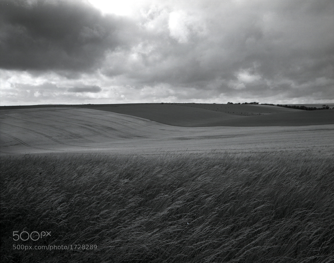 Photograph Wheat and Barley, South Downs by Chris Tubb on 500px