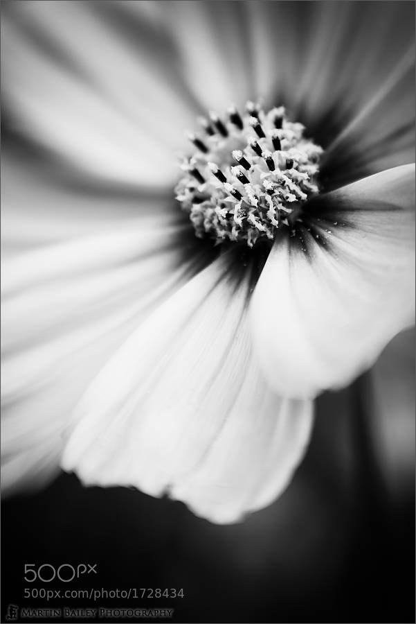 Photograph Another Dreamy Cosmos by Martin Bailey on 500px