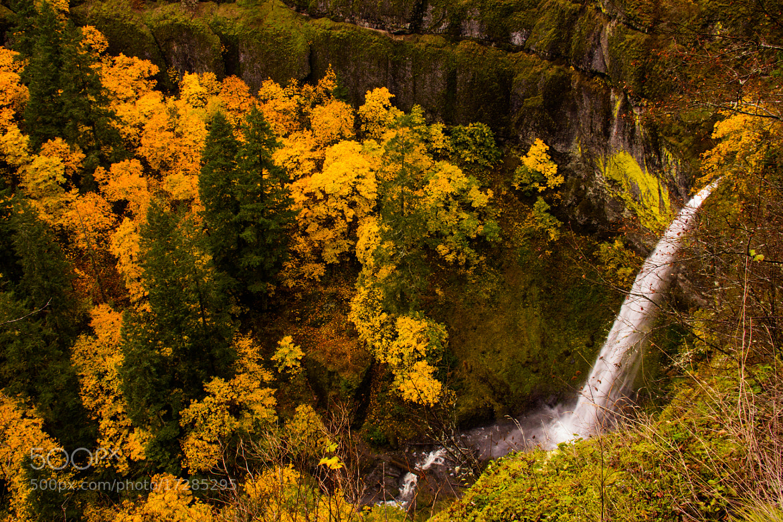 Photograph  Fall colors by Matt Sven Bjork on 500px