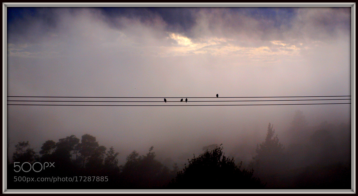 Photograph Foggy Morning by di  northey on 500px