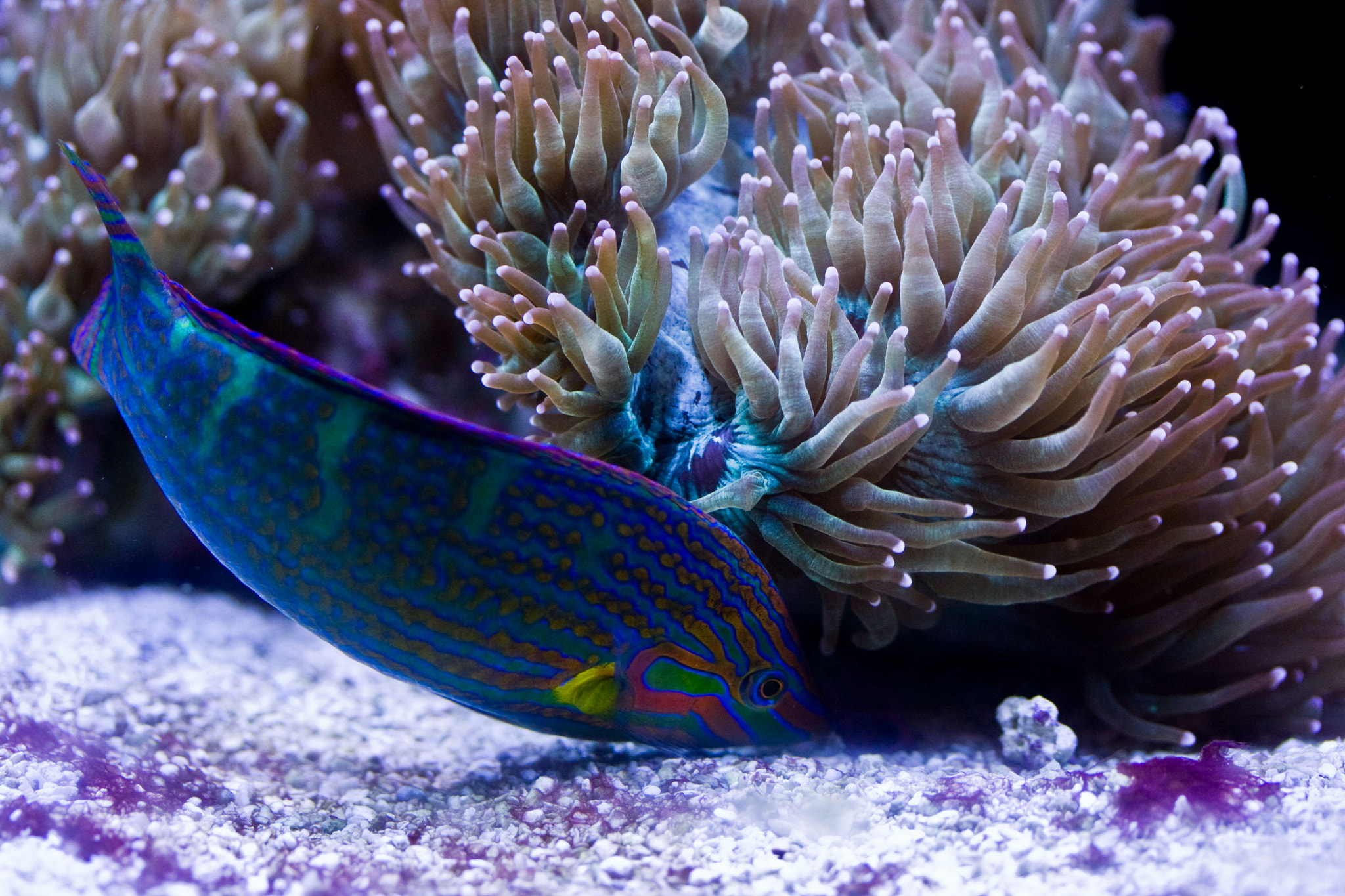 Photograph Wrasse by Begoña Garcia on 500px