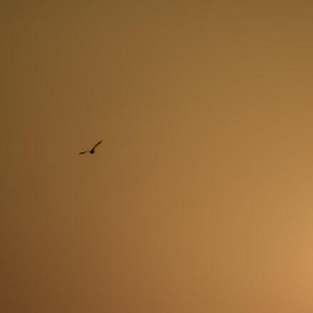 sun & fly