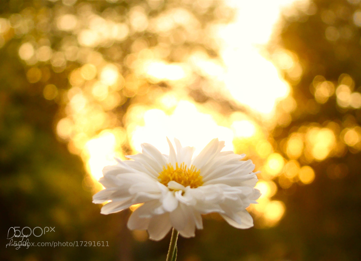 Photograph Macro + Bokeh  by Red Danyar on 500px