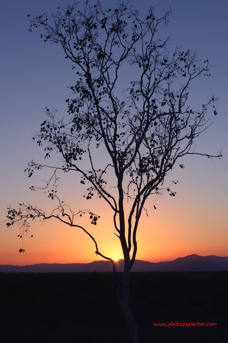 Photograph Sunset through Tree by Phil Copp on 500px