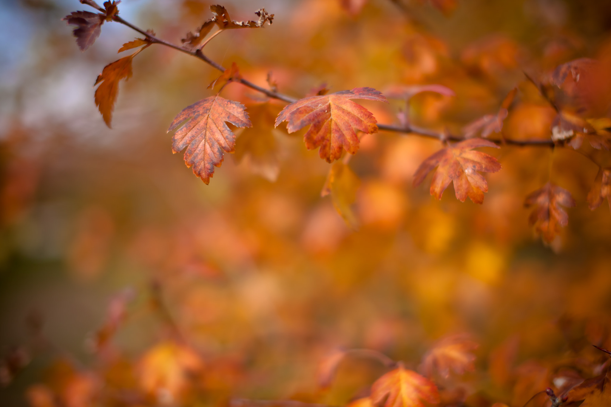 Photograph Leafs by Timur Ateev on 500px