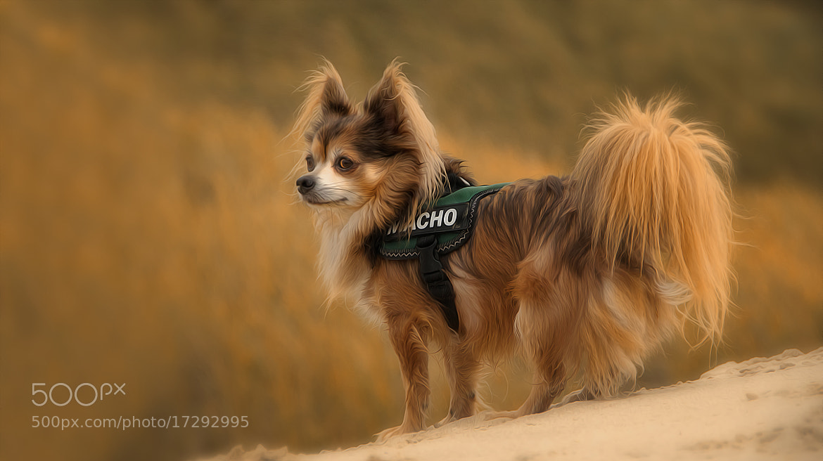 Photograph 20-cm-macho ;-) by Sonja Probst on 500px