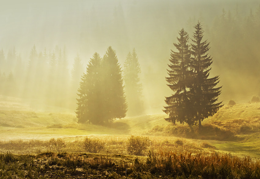 Photograph Foggy morning by Petar Krusev on 500px