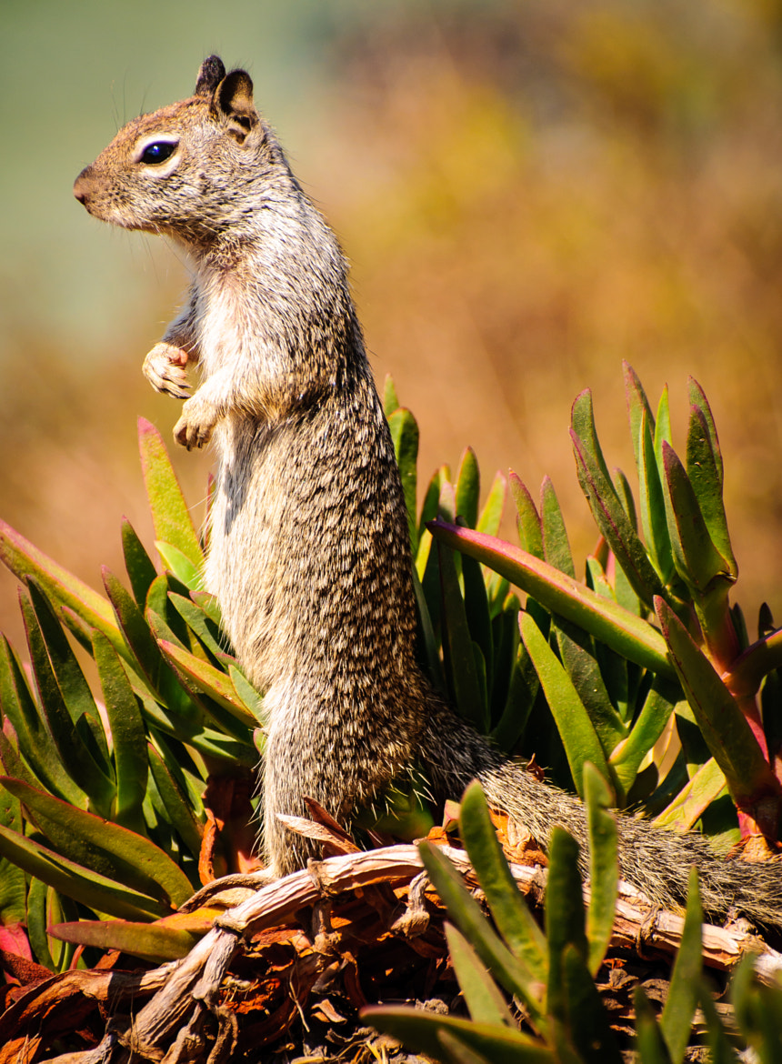 Photograph Squirrel!!! by Blake Coble on 500px