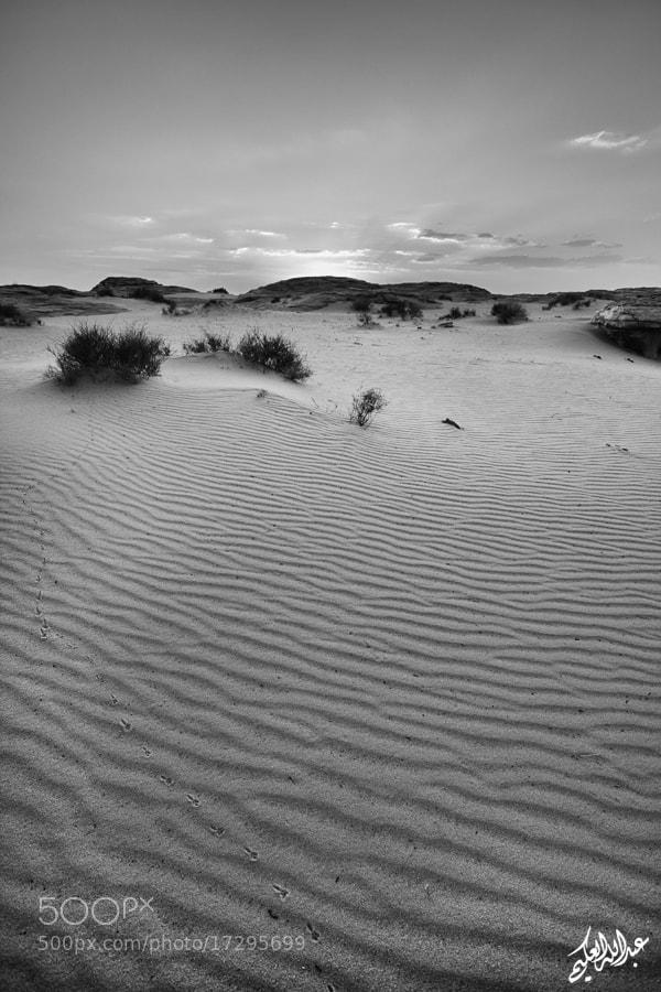 Photograph » Sad Desert  by Abdullah Al-Okime on 500px