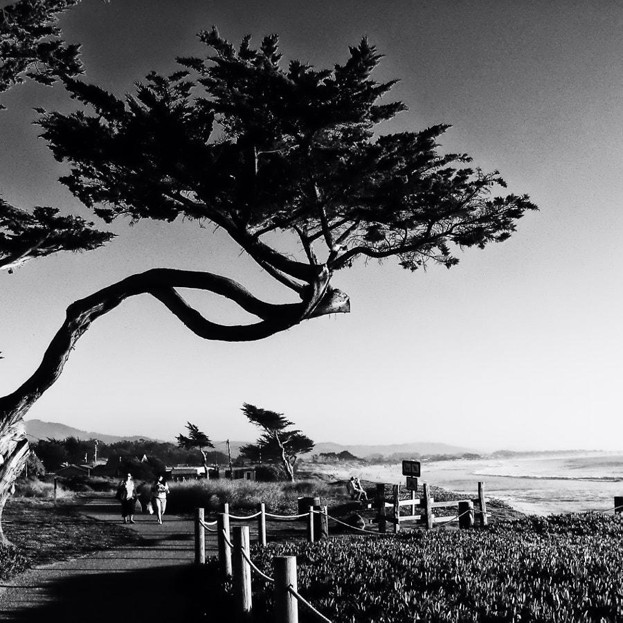 California Coast Walk