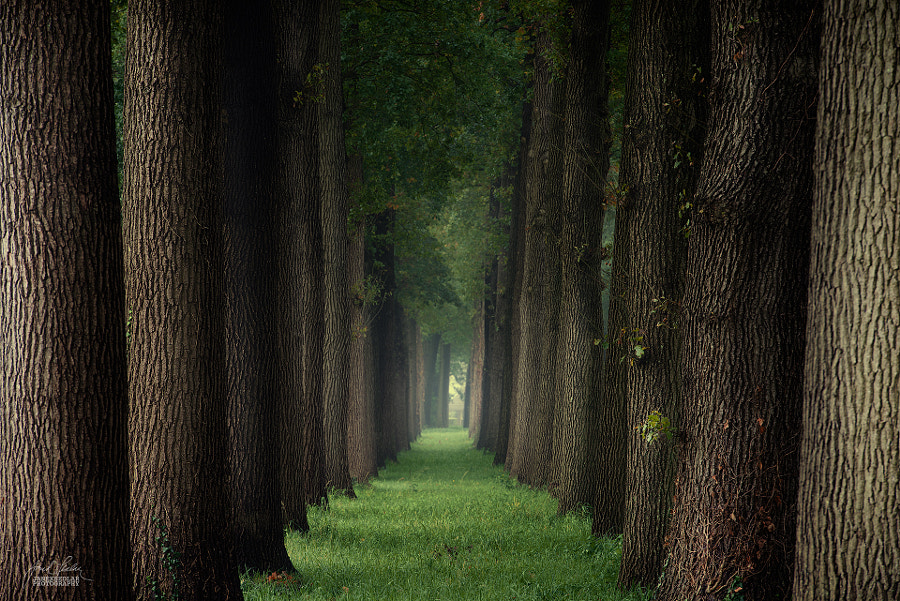 Observe the world in details and little things by Janek Sedlar on 500px.com