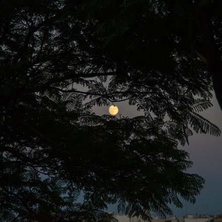 Moon behind leaves, Sony ILCE-7, Sigma ZOOM-alpha 35-135mm F3.5-4.5