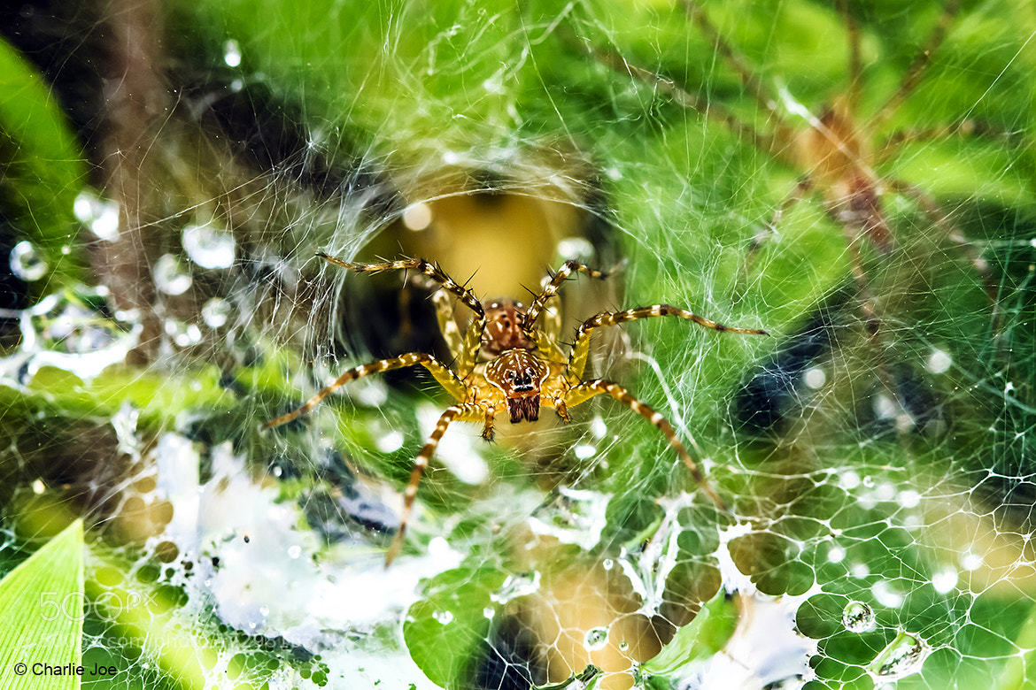 Photograph www: World Water Web by Charlie Joe on 500px