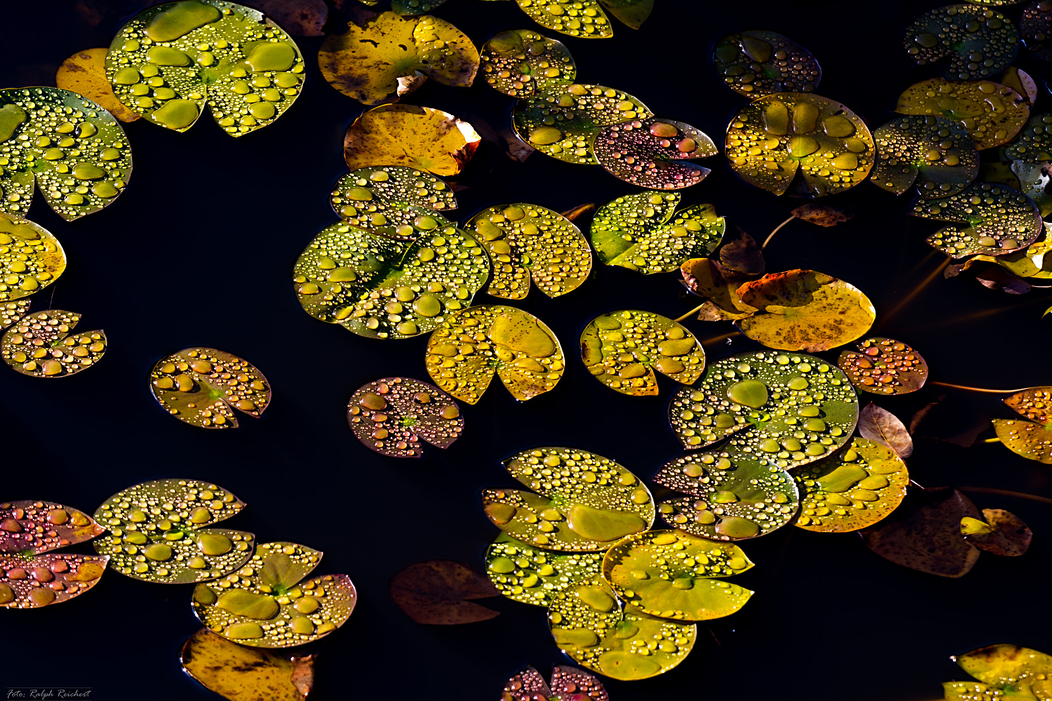 Photograph Autumn on the water by Ralph Reichert on 500px