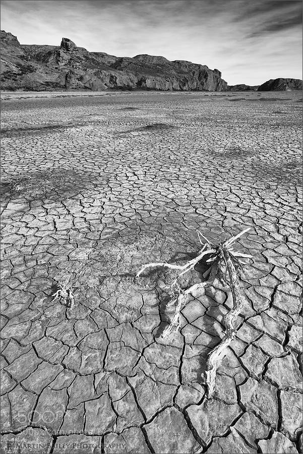 Photograph Stick on Arid Riverbed by Martin Bailey on 500px