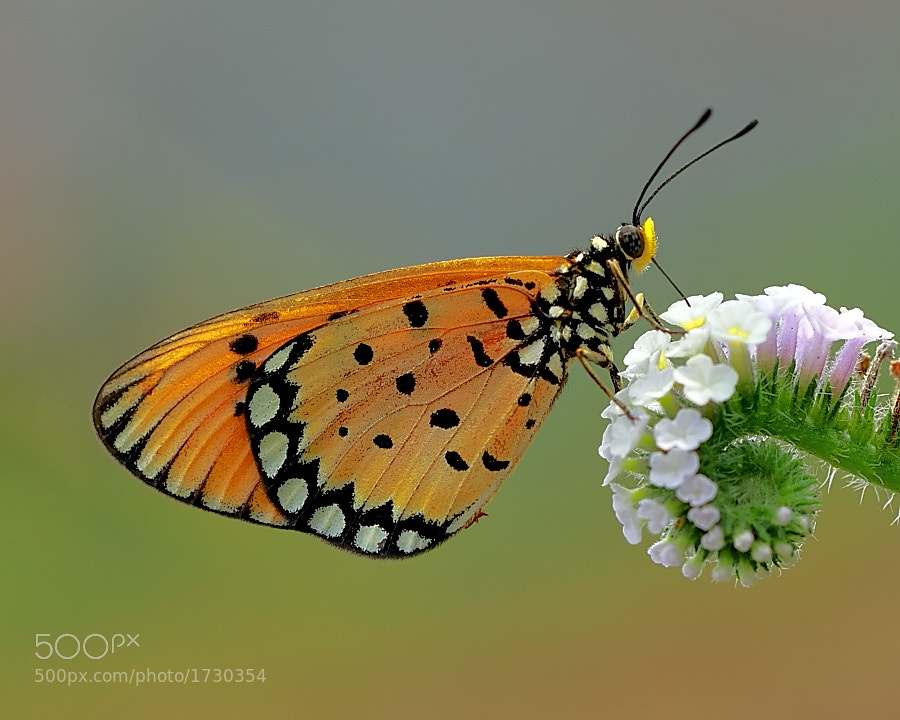Photograph yellow and beauty by monica anantyowati on 500px