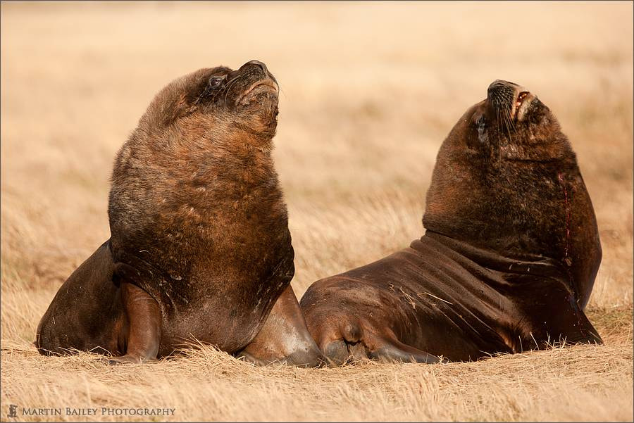 Photograph Seals in the Savanna? by Martin Bailey on 500px