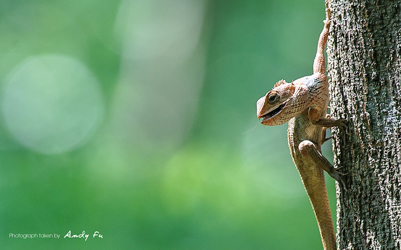 Photograph Lizard by Andy Fu on 500px
