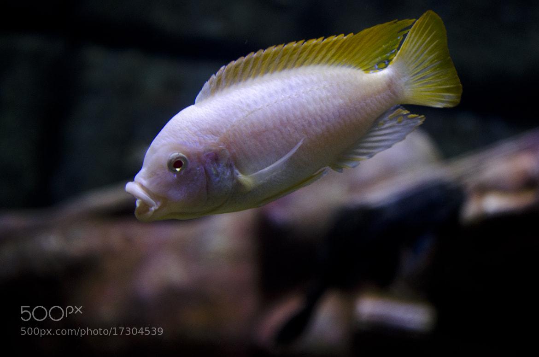 Photograph  fish  by Ilke Sanlav on 500px