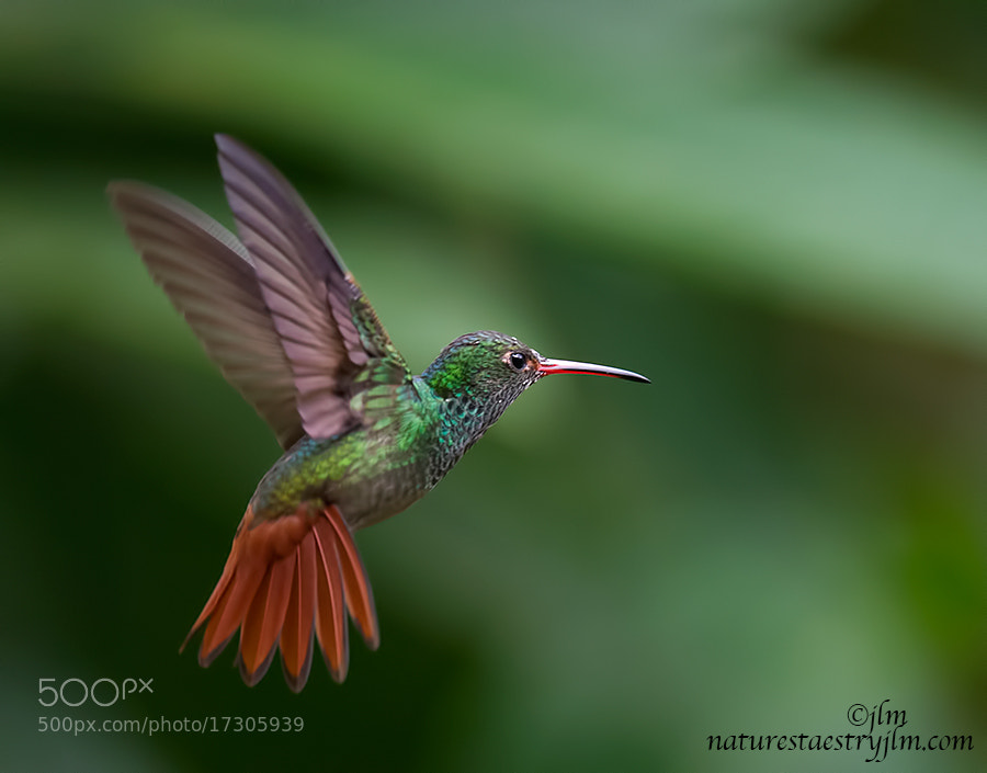 Colorful hummingbirds flying - photo#5