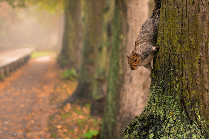 Photograph Same Squirrel  by Thomas Sewell on 500px