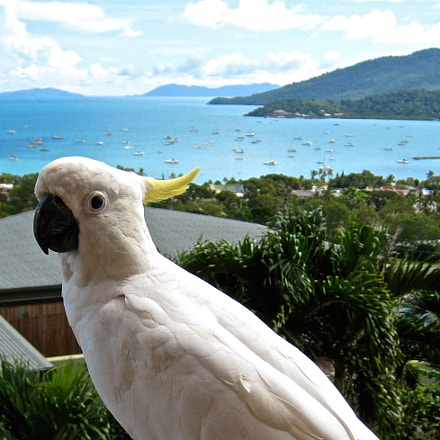 Cockatoo, Canon POWERSHOT SD800 IS