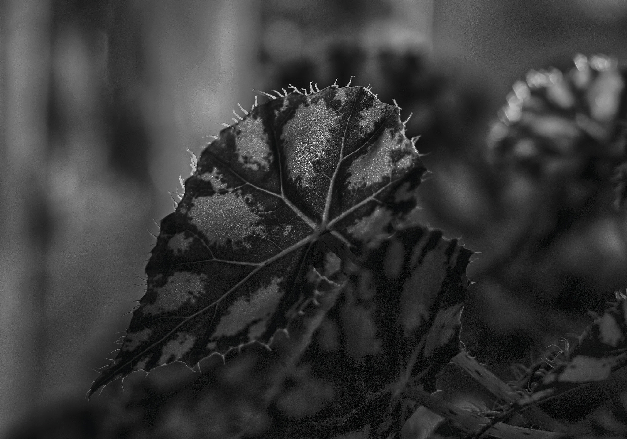 Photograph Spotted Leaves by Szabó István on 500px