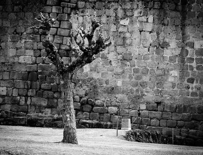Photograph Dry Tree by Enrico Maria Crisostomo on 500px