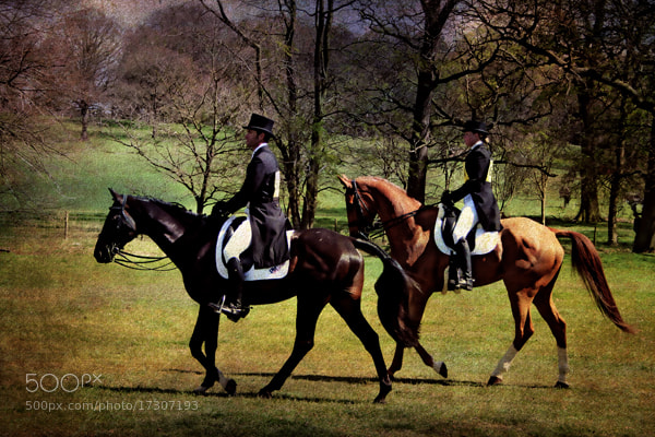 Photograph Dressage Pair by Simon Harris on 500px