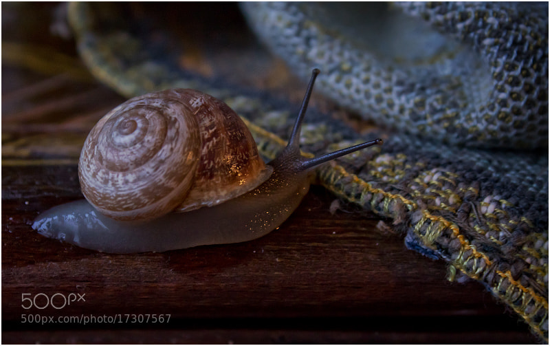 Photograph Улитка / snail by Viktoria Imanova on 500px