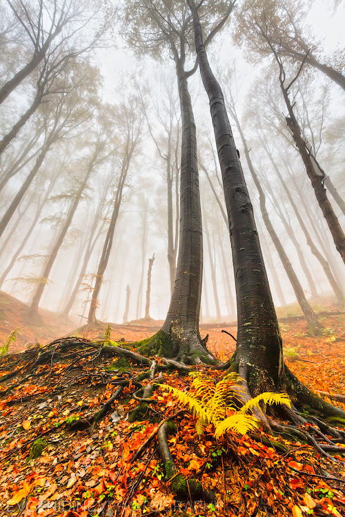 Photograph Forest's Lords by Evgeni Dinev on 500px