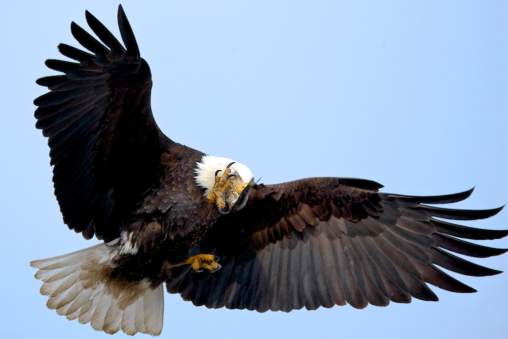 Photograph In-Flight Catch by Buck Shreck on 500px