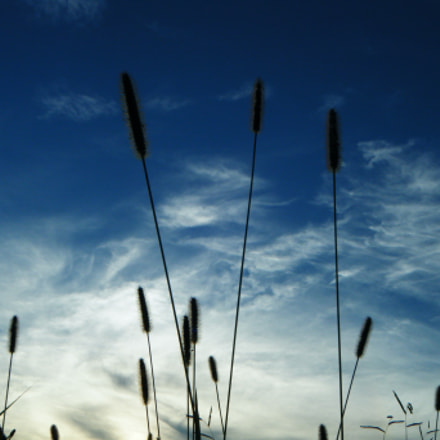 Grass of the sky, Fujifilm FinePix Z30