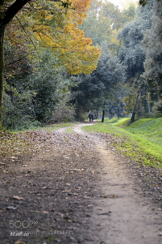 Photograph Sentieri autunnali/ Pathway by Martina Rio on 500px