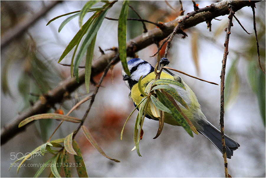 Photograph Акробат ... by Valdimantas Grigonis on 500px