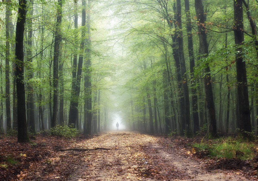 Photograph Forest by Hober Szabolcs on 500px