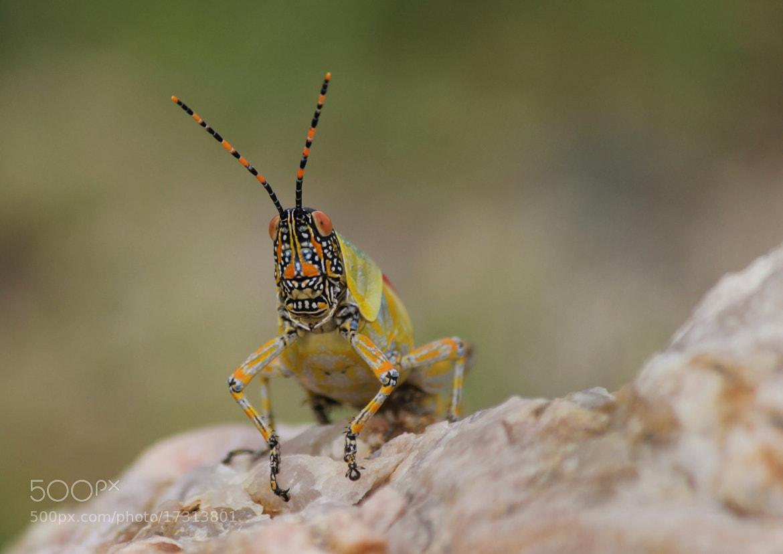 Photograph Alien Beauty by Mark Jones on 500px
