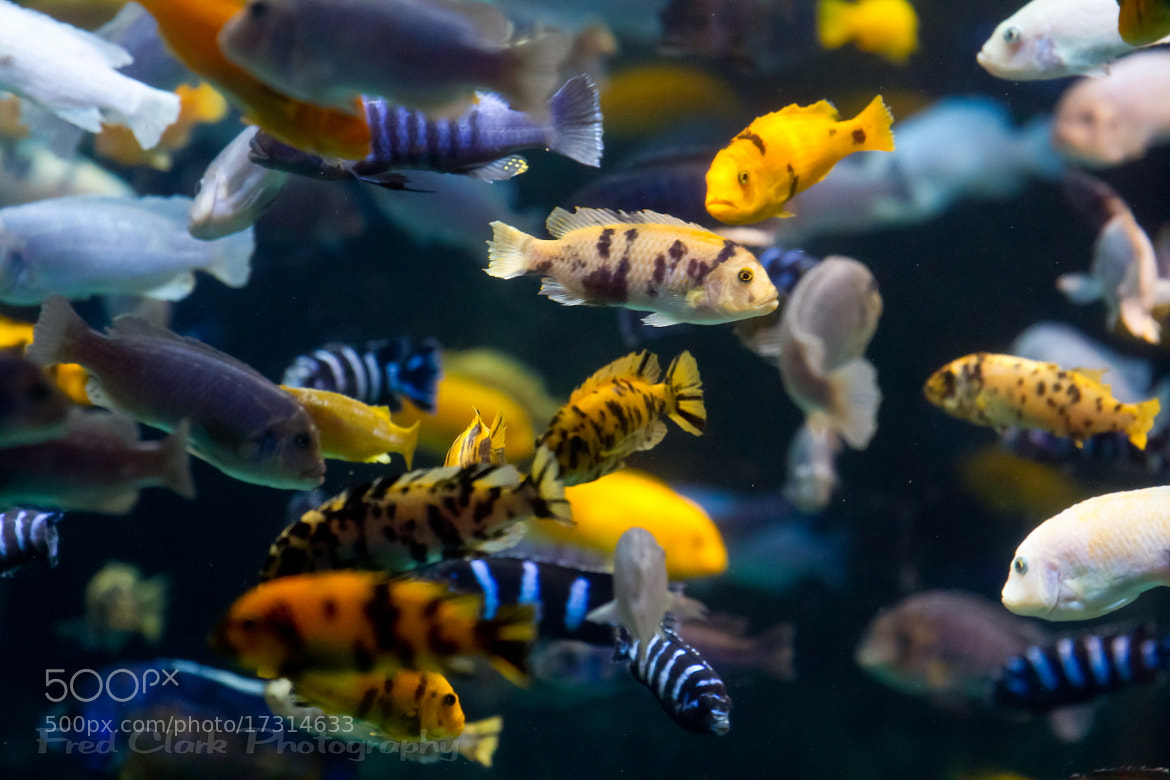Photograph Fish Bowl by Fred Clark on 500px