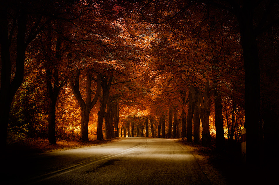 Photograph golden road by Marek Czaja on 500px