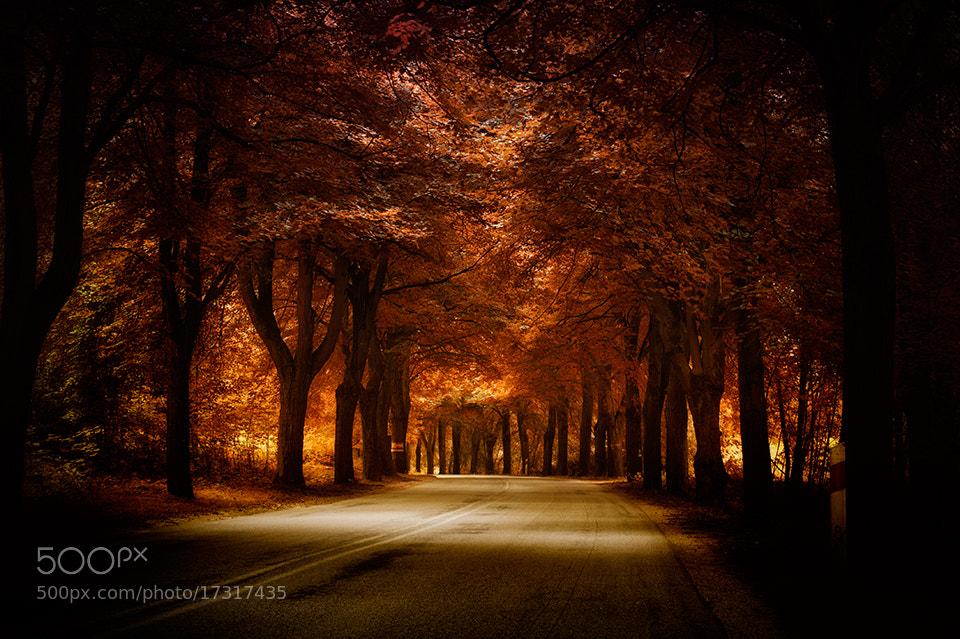 Photograph golden road by Marek Czaja on 500px