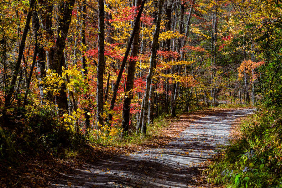 Photograph Smoky Mountains Backroads by Dale Ward on 500px