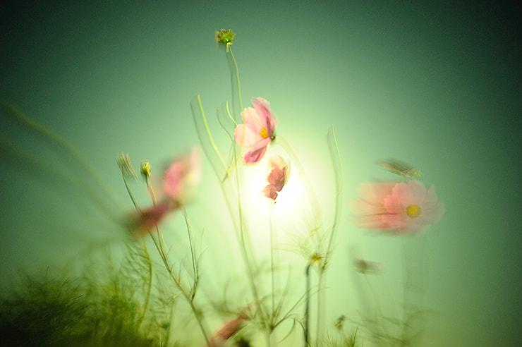 Photograph 花 - 흐른 by heydah on 500px